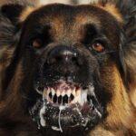 Video: Đặc nhiệm Mỹ hướng dẫn cách đối phó khi bị chó cắn